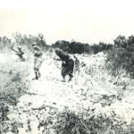 Soldati italiani in azione nella boscaglia